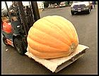 Moving competition-size pumpkins calls for a forklift.